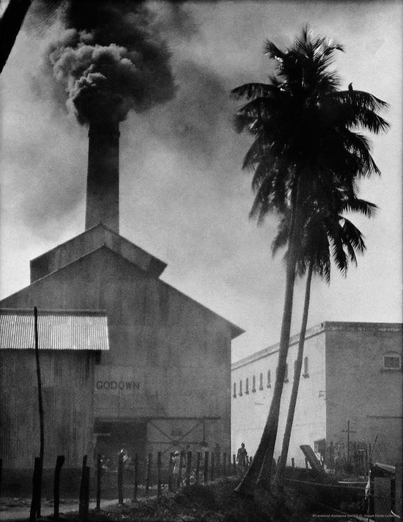 Palm and Chimney, Birla Jute Mill, Calcutta, India, 1929
