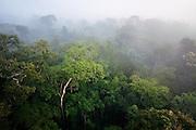 Rainforest in the morning mist. Cristalino State Park, Alta Floresta, Mato Grosso,  Brazil, March, 2009.