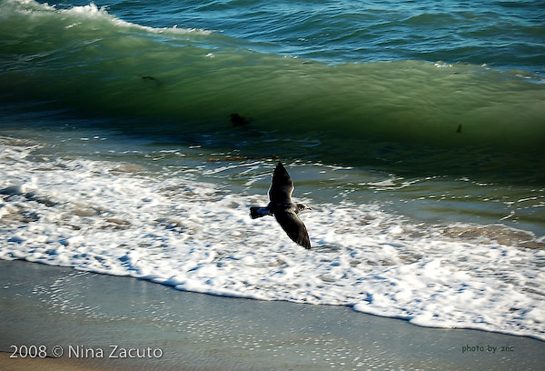 Seagull in flight over the waves.