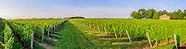 Field of Grape Vines,  7035 Mattituck, NY