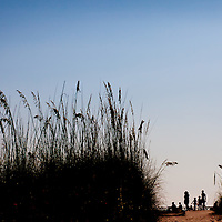 Sea-grasses sway at Pass-A-Grille Beach.