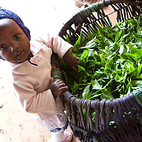 A child plays with the brightly-colored tea leaves that have been collected in a hand woven basket from the tea fields of Nyeri County.