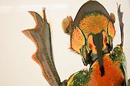 Bob Sober donates photos to Department of Entomology