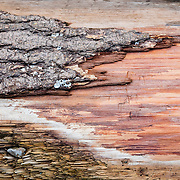 The surface of a weathered piece of driftwood displays abstract patterns on the beach of Seahurst Park, Burien, Washington. Barnacles grow on the bark that remains.