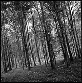 Woodland, Kennick, Devon 2011
