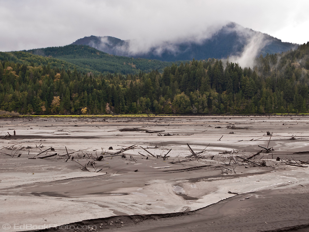 glacial silt and broken trees litter the exposed lake bottom of Alder Lake, Elbe, WA, USA