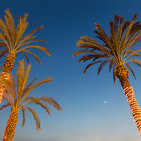 Egypt, Cairo, Low angle view of palm trees circled with glowing lights along Nile River with crescent moon at dusk