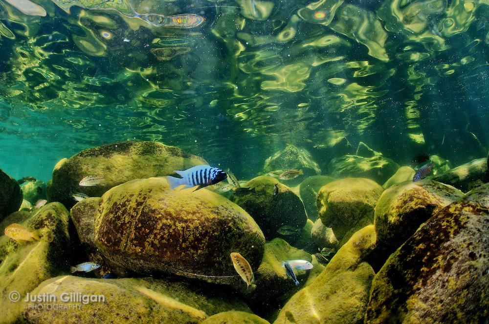 UnderwaterLakeMalawi-02.jpg