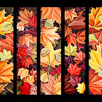 The best of Autumn's colors: golds, rust, scarlet, butter yellow...one of the reasons this is many people's favorite season! <br /> <br /> Oil on birch panel; 5 panel set, each panel 6 x 20  <br /> <br /> Contact artist about prints.