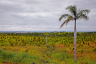 The view to Manuel Sanguily west of Palma Rubia, Pinar del Rio, Cuba.
