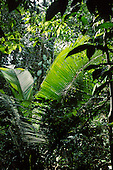 Rainforest biome: Africa, South America: climate, ecology, trees, life forms, aerials, canopy