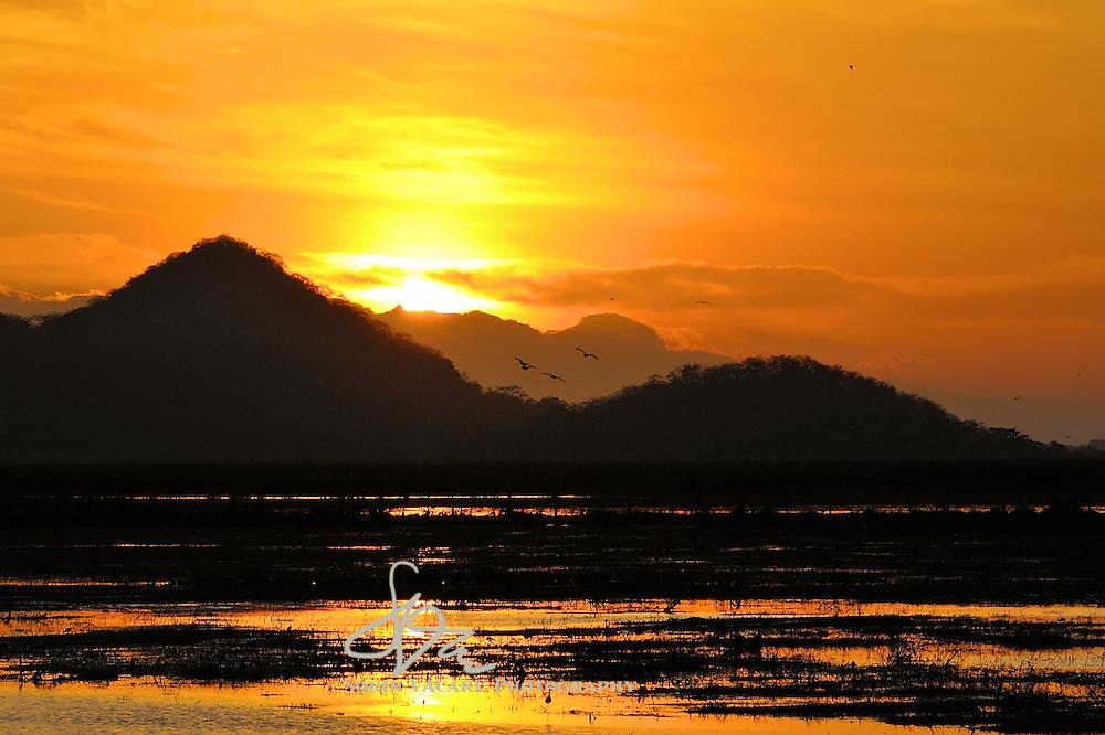 Birds taking flight in a marsh at sunrise