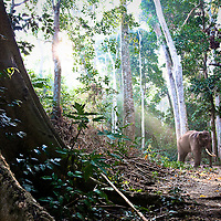 Beautiful sunray highlights wicked colors in the forest of the Andamans with Rajan the elephant framed nicely.