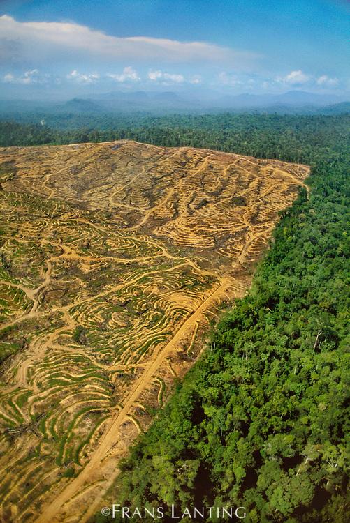 Rainforest clear-cut for oil plantation (aerial), Sabah, Borneo