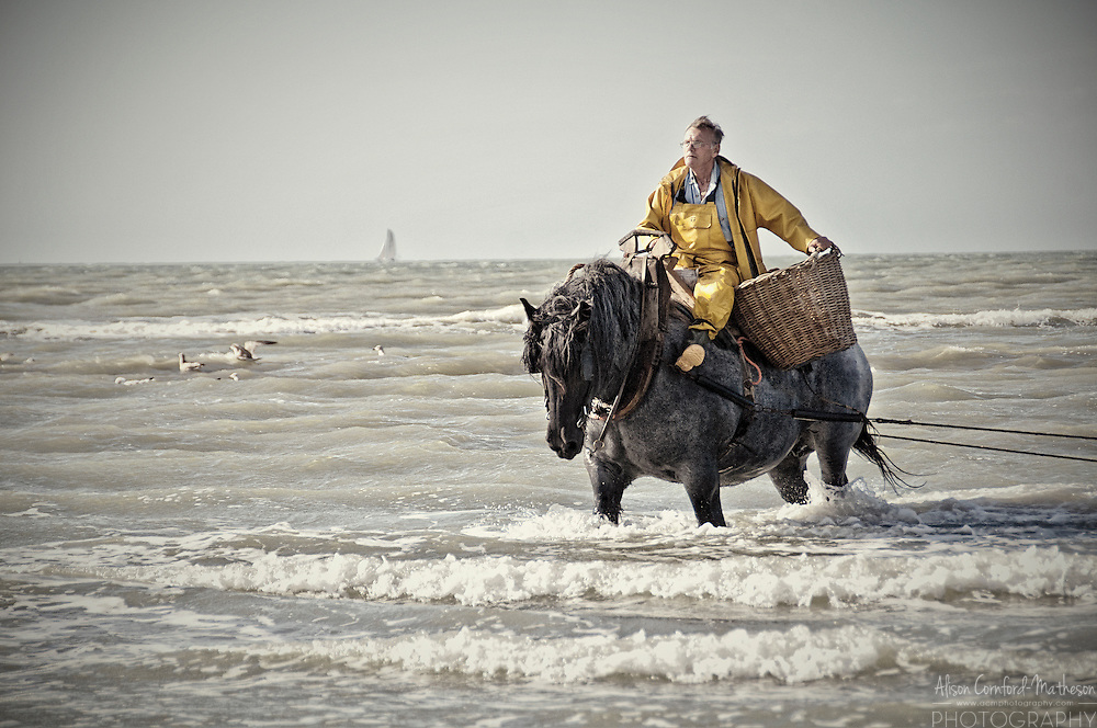 Belgium's UNESCO protected Shrimp Fishermen on Horseback at Oostduinkerke, in Flanders, Belgium. For more information, please visit http://cheeseweb.eu/2013/05/shrimp-fishing-horseback-oostduinkerke-belgium/