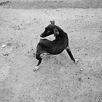 Dog, Merida, Mexico