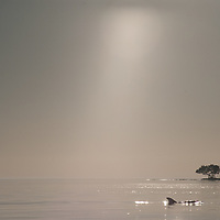 A dolphin emerges near a mangrove island near Indian Key Pass in the Florida Everglades