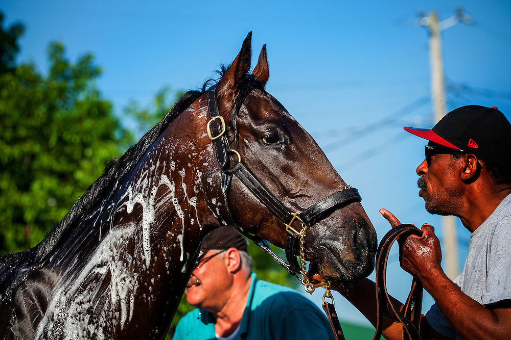 Kentucky Derby contender Orb gets a bath at Churchill Downs in Louisville, KY on May 01, 2013. (Alex Evers/ Eclipse Sportswire)