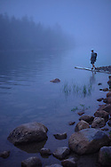 A photographer explores a foggy Jordan Pond at dusk in Acadia National Park, ME.