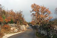 smale veier, narrow roads, høstfarger, automn colors