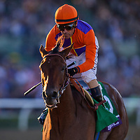 Beholder, ridden by Gary Stevens wins the Breeders' Cup Distaff on November 1, 2013 at Santa Anita Park in Arcadia, California during the 30th running of the Breeders' Cup.(Alex Evers/ Eclipse Sportswire)