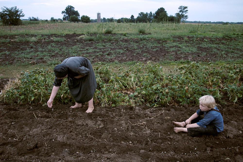 Ensemencement &agrave; la ferme des Petersheim. Le potager &agrave; l'arri&egrave;re de la maison sert &agrave; faire pousser tomates de vari&eacute;t&eacute;s anciennes, salades, pommes de terre, radis, haricots, betteraves, de cassis, rhubarbe, fraises...<br /> Les Petersheim, install&eacute;s comt&eacute; de Clark depuis quatre g&eacute;n&eacute;rations, ont onze enfants de 5 &agrave; 23 ans. Pendant l'&eacute;t&eacute;, alors qu'il n'y a pas &eacute;cole, tous prennent part aux activit&eacute;s quotidiennes de la ferme et des r&eacute;coltes. Sur leur exploitation de 162 hectares, la taille moyenne d'une ferme Amish, ils cultivent de l'avoine, du bl&eacute;, du ma&iuml;s, du soja, du sorgo et du millet en suivant des techniques &eacute;cologiques traditionnelles. Ils ont &eacute;galement 40 chevaux, 25 vaches et un petit &eacute;levage de poules et cochons.<br /> <br /> Petersheim's farm, seeds spreading.<br /> A vegetable garden is arranged in the back of the house to grow heirloom tomatoes, salad, potatoes, radish, bean, beet, blackcurrant, rhubarb, strawberries etc...<br /> The Petersheim, established in Clark county since four generations, have eleven children from 5 to 23 years old. During the summer, whereas the school is closed, all take part in the daily activities of the farm and with harvests. On their exploitation of 162 hectares, average size of an Amish farm, they cultivate oat, wheat, corn, soy beens, sorgo and millet following ecological techniques. They also have 40 horses, 25 cows and a small breeding of hen and pigs.