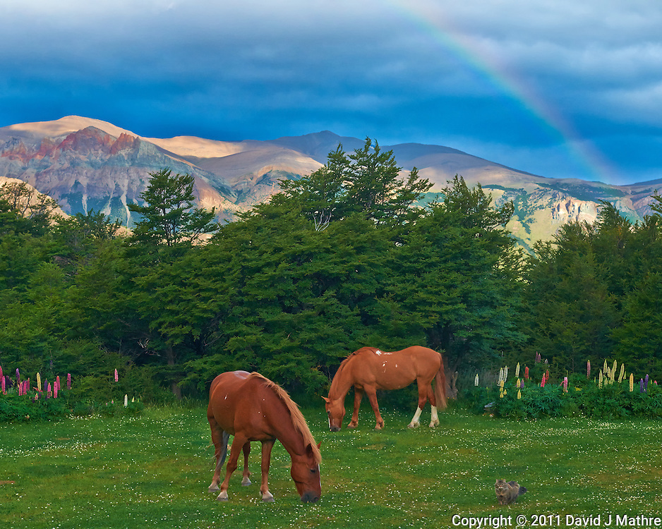 A Cat with Two Horses Grazing under a Rainbow in the Backyard of Hosteria El Pilar in El Chalten, Argentina - Patagonia. Image taken with a Nikon D3x and 50 mm f/1.4G lens (ISO 800, 50 mm, f/6.3, 1/500 sec). Image process with Capture One Pro 7, Focus Magic, and NIK/Google Define 2 + Color Efex 4.