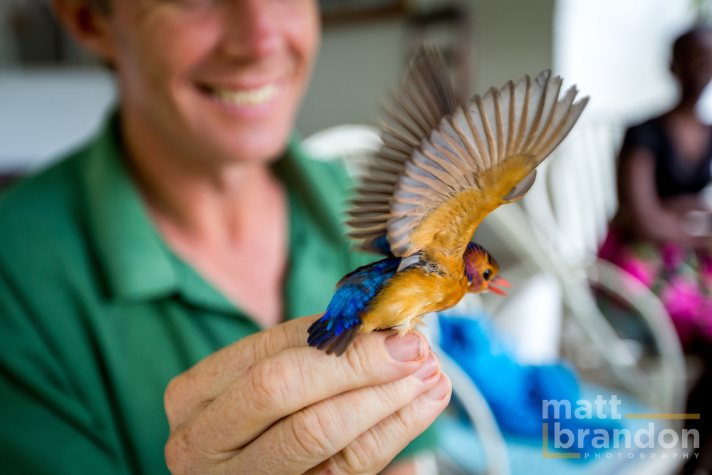 A Pygmy Kingfisher streaches it's wings.