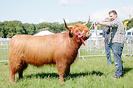 The Angus Show, Brechin, Saturday 8th June, 2013. Highland champion from D McNaughton,
