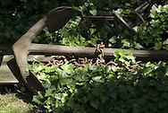 bower anchor