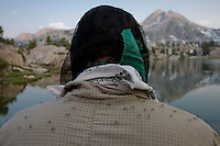 Mosquitoes in Sixty Lakes Basin of the Sierra Nevada, California
