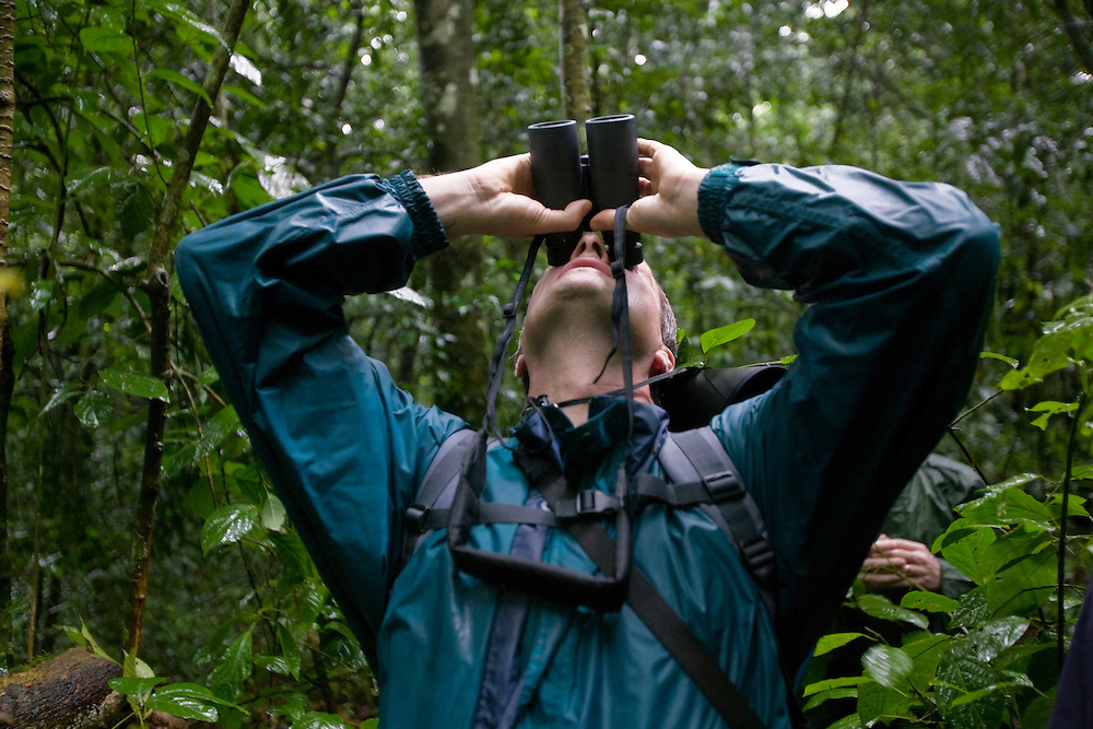 Africa, Uganda, Kibale Forest Reserve, Tourist looking up through binoculars at Chimpanzee (Pan troglodytes) sitting on tree branch above rainforest