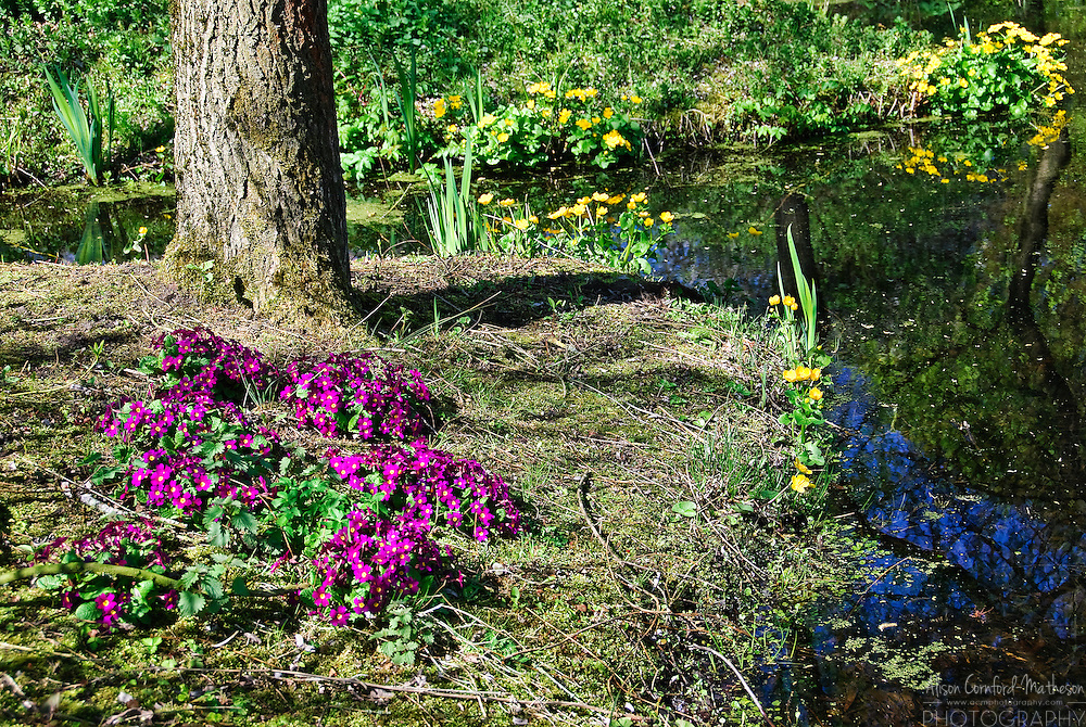 Kasteeltuinen Arcen Gardens Gate near Venlo in Limburg Province, The Netherlands A stream runs through the shade theme garden at Arcen Gardens