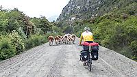 Traffic jam at Carretera Austral, Chile