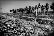 Each sugar cane worker has an individual identification number which is used to mark his piles of cut cane. For each ton of cane he receives approximately $2.50. Recent negotiations by labor unions have assisted workers in receiving correct valuation of their cuttings, near Barahona, Dominican Republic.