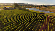 Montinore estate vineyard, Willamette Valley, Oregon