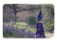 Boy, 6, in wizard's costume in bluebell wood, Scotland