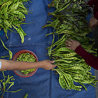 petai, or stink beans so called for their pungent aroma are sold on a street in Balik Pulau, Penang, Malaysia