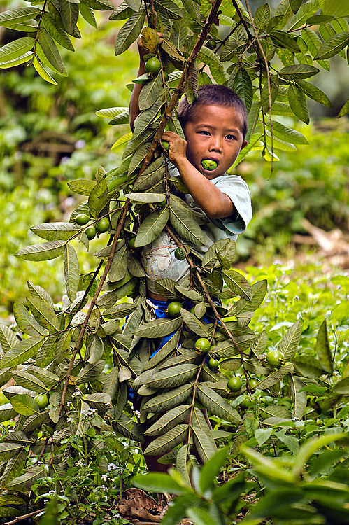 A boy enjoys some green guava in Luang Prabang, Laos.