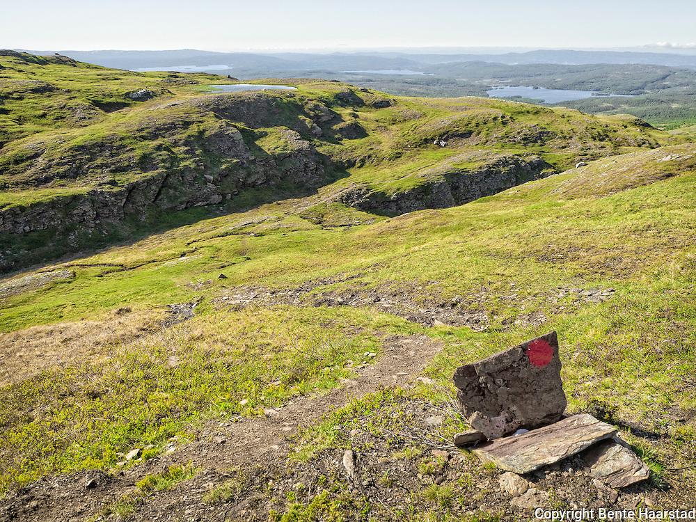 Stien opp til fjellet Bringen, 1.042 moh., fra Østrungen og Skytthullet i Selbu, Sør-Trøndelag.