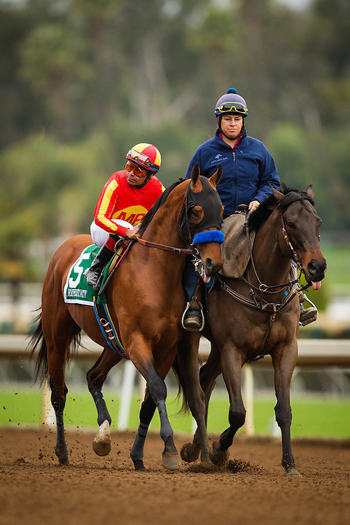 January 09, 2016: Hoppertunity at the San Pasqual Stakes at Santa Anita Park, Arcadia CA. Evers/ESW/CSM
