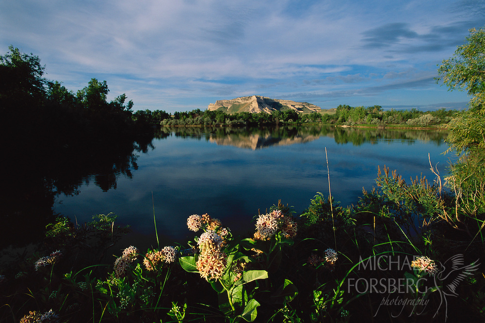 Scotts Bluff National Monument is reflected in a side channel of the North Platte River with common milkweed plants blooming the foreground.  Nebraska Panhandle.