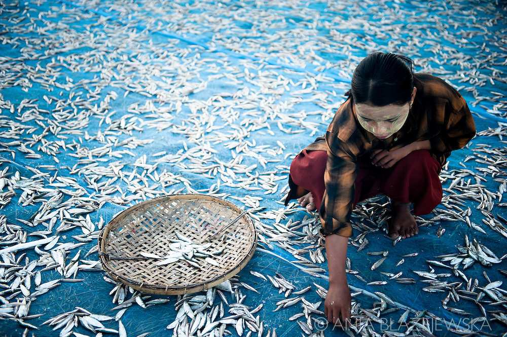 Myanmar, Ngapali. A young girl works drying fish.<br />