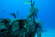 Bow Starboard Side, Oro Verde, Shipwreck, Grand Cayman