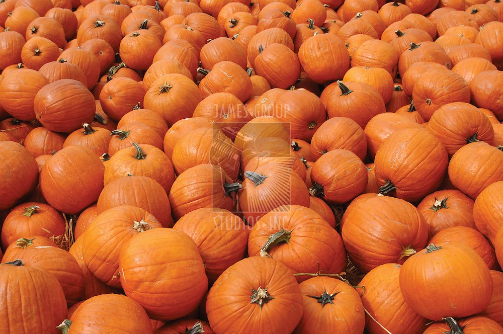 Hundreds of orange pumpkins