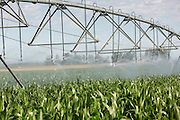 Large scale irrigation of a corn field July 25, 2015 outside Fort Collins, Colorado.