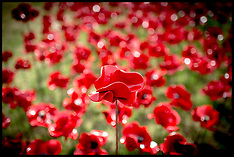 AUG 05 2014 Blood Swept Lands and Seas of Red-Tower of London