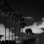 Nightime sky with palms trees and clouds