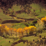 Cottonwoods in their autumn best in Canyon de Chelly National Monument on the Navajo Reservation in Arizona.