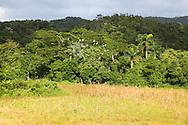Egrets, El Moncada, Pinar del Rio, Cuba.